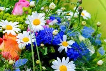 flower-wallpapers-beautiful-colorful-flowers-wallpaper-33556